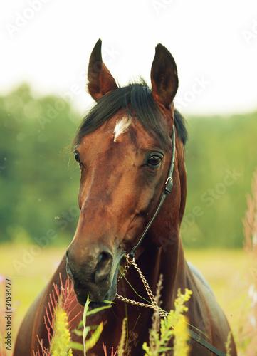 Fototapeten,pferd,tier,rasse,schöner
