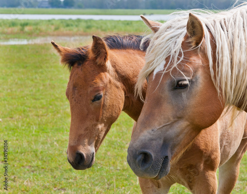 Double portrait of a mare and her foal