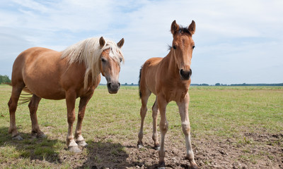 Posing mare and her foal