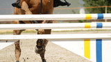 equestrian show jumping poster