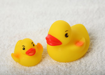 Rubber ducks parent and child