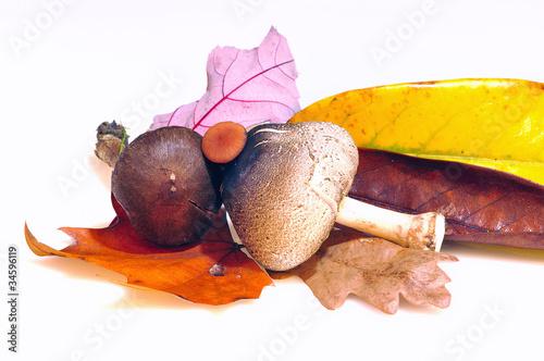 poster of Setas comestibles aisladas.