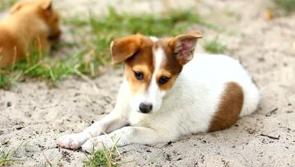 Смешной щенок лежит на песке