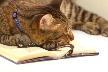 睡魔に負けた読書中のネコ