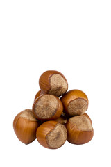 Brown Hazelnuts
