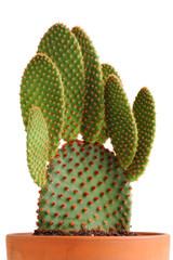 Kaktus mit Tontopf