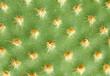 Kaktus im Detail - Macroaufnahme