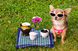 Weekend picnic concept - dog relaxing in meadow poster