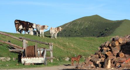 Tramonto sul bestiame al pascolo e un cane da caccia