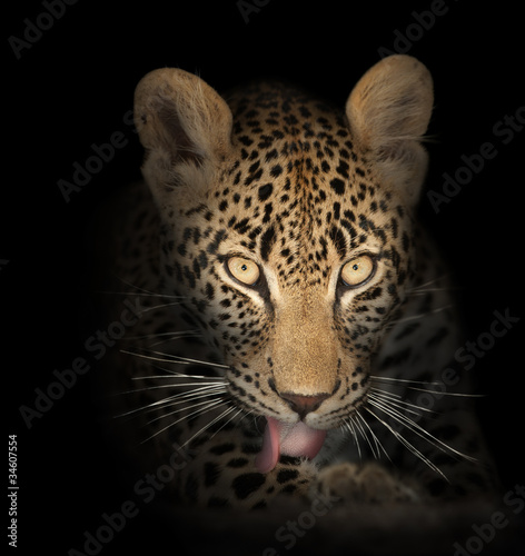 Fotobehang Luipaard leopard in the dark