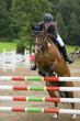 Fototapeten,ritt,hüpfen,springreiten,pferd