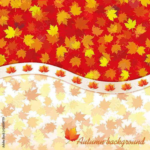 Autumn background with maple leaves, vector
