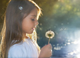 Blowing dandelion at sunset