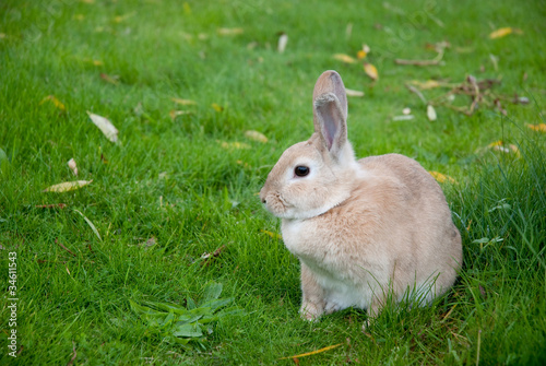 Rabbit Sitting On Green Meadow