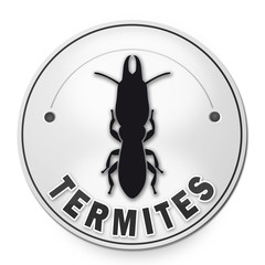 Diagnostic immobilier : les termites