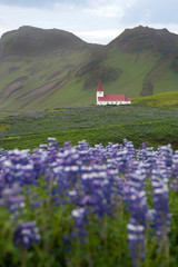 Small white church on the flower meadow in Vik, Iceland