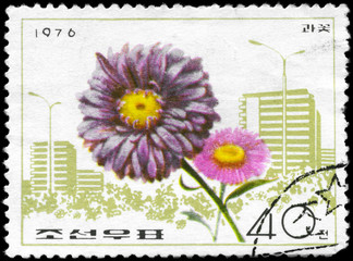 NORTH KOREA - CIRCA 1976 China Aster