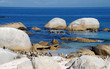 penguins on Atlantic coast(South Africa)