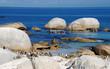 penguins on Atlantic coast(South Africa)