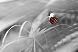 Schmetterling in Farbe