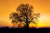 Fototapeta słońce - niebo - Drzewo