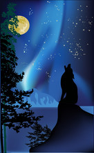 howling wolf on rock at aurora