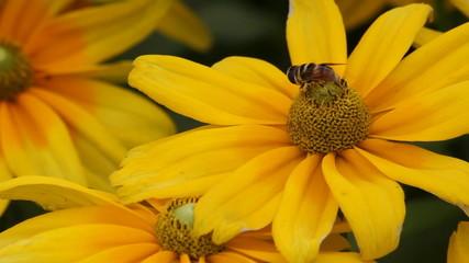 flowerbee 1