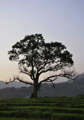A Beautiful Tree at Sunset
