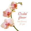 Orchid Flower - Beautiful Birthday Gift