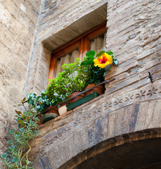 Architectual details  window with flower - Tuscany - Italy