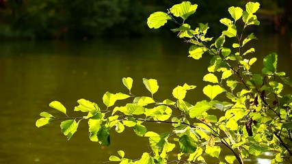 bush with leaves ashore to a reservoir is shined with the sun
