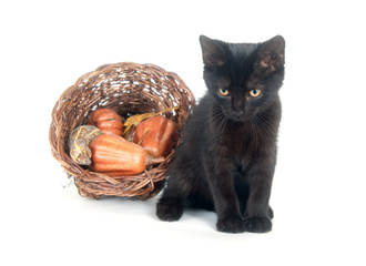 Black cat and cornucopia