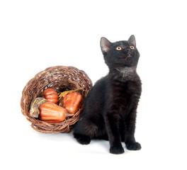 Black cat and cornucopia