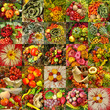 collage with autumnal vegetable compositions