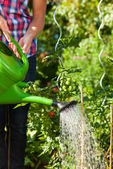 Gartenarbeit im Sommer - Frau gießt die Pflanzen