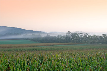 Foggy Sunrise on Pennsylvania Cornfield