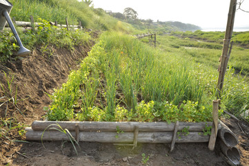 Garden Parsley Leek Farm Block