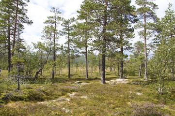 Schweden Dalarna Fulufjäll Nationalpark