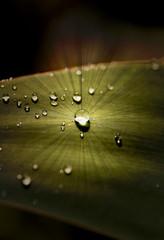 Glowing water droplet