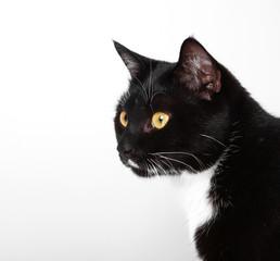 Katze Kitten