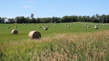 Rural landscape. Hayfield. Ontario, Canada.
