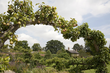 English Cottage Garden through Pear Tree Arch