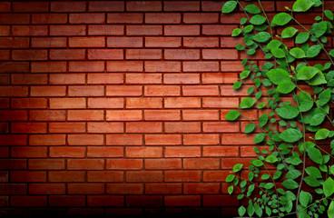 Brick wall with climbing plants