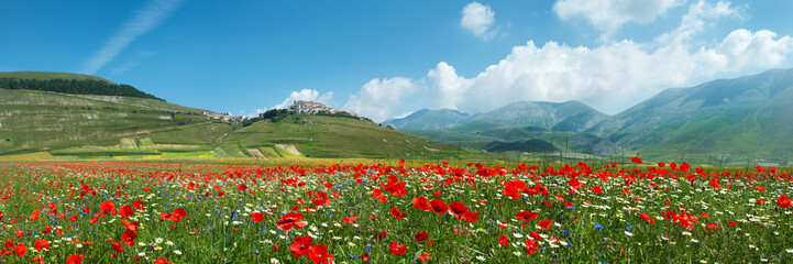 Panoramica Fioritura Castelluccio