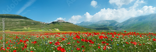 Panoramica Fioritura Castelluccio - 34688975