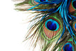 canvas print picture - Peacock Feather