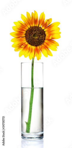 beautiful sunflowers in vase isolated on white