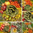 fall vegetable compositions