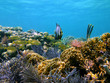 Tropical fish in caribbean corals