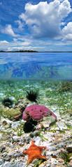 Colorful ocean